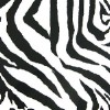 Zebra Black White